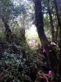 Jungle trail, Cameron Highlands