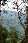 Gunung Leuser Nationalpark