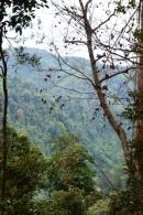 Gunung Leuser Nationalpark