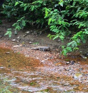Gunung Leuder Nationalpark, Sumatra, jungle trekk
