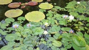 Pond, Wintergarden